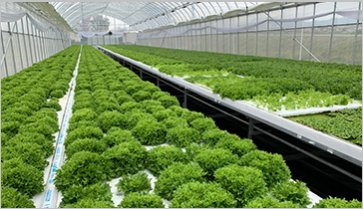 Hydroponic System Ondine VH