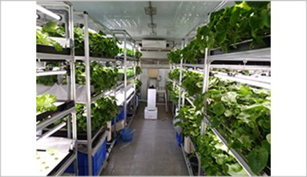 Simple Hydroponics system